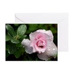Soft Pink Rose Photograph Greeting Card