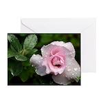 Soft Pink Rose Photograph Greeting Card