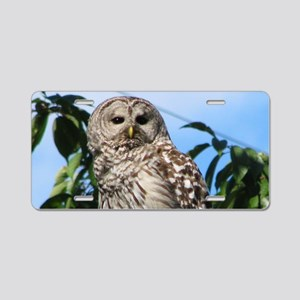 Barred Owl On Wire Aluminum License Plate