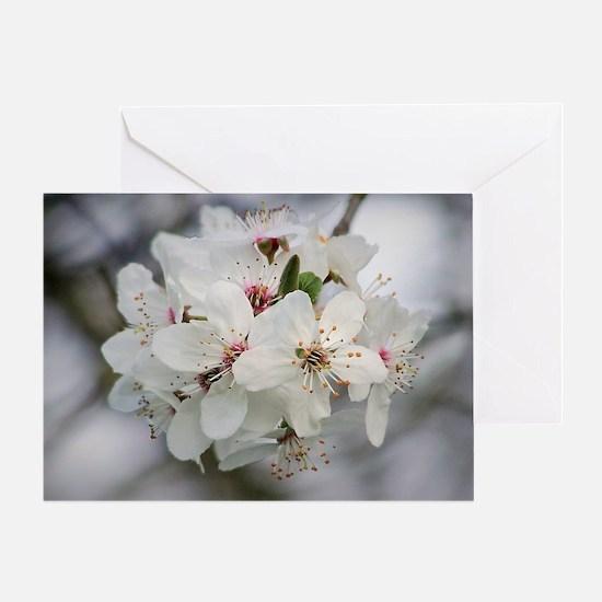 Cute Cherry blossom Greeting Card