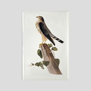 Merlin Falcon Audubon Vintage Art Magnets