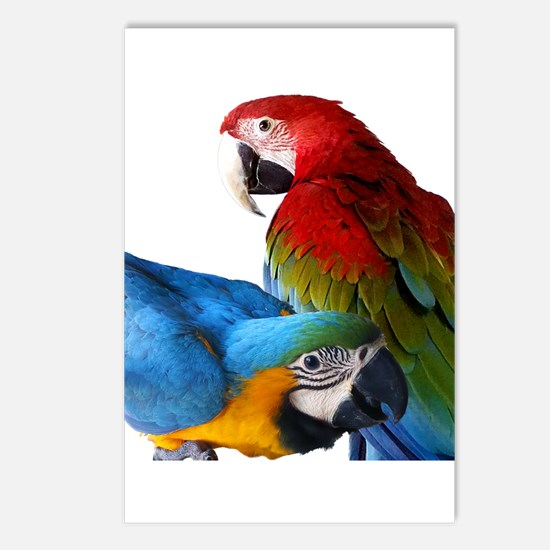 2 Macaws Postcards (Package of 8)