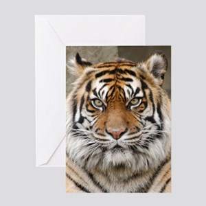 Tiger 12 Greeting Cards
