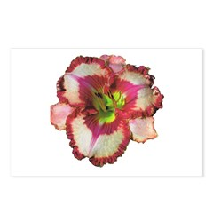 Red Ruffled Daylily Postcards (Package of 8)