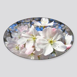 Cherry Blossom Blush Sticker