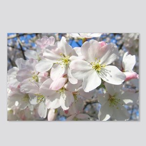 Cherry Blossom Blush Postcards (Package of 8)