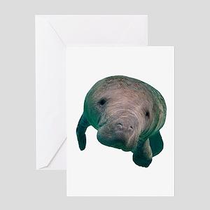 CURIOUS Greeting Cards