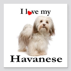 "Love My Havanese Square Car Magnet 3"" x 3"""