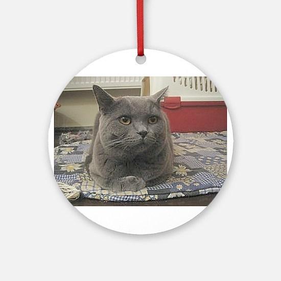 british shorthair gray Round Ornament