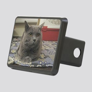 british shorthair gray Hitch Cover
