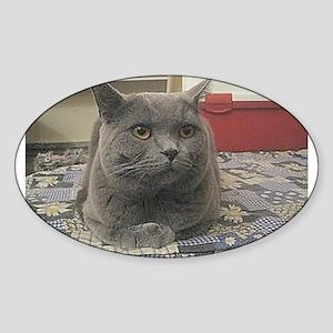 british shorthair gray Sticker