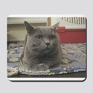 british shorthair gray Mousepad