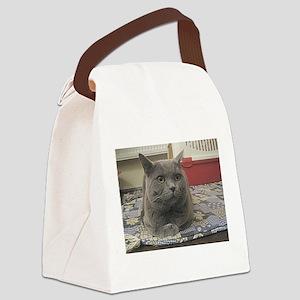 british shorthair gray Canvas Lunch Bag