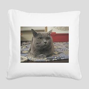 british shorthair gray Square Canvas Pillow
