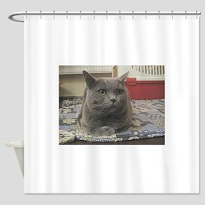 british shorthair gray Shower Curtain