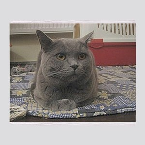 british shorthair gray Throw Blanket