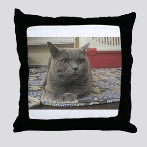 british shorthair gray Throw Pillow