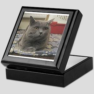 british shorthair gray Keepsake Box
