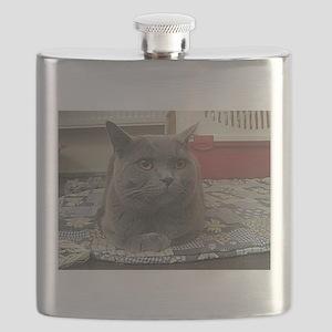 british shorthair gray Flask