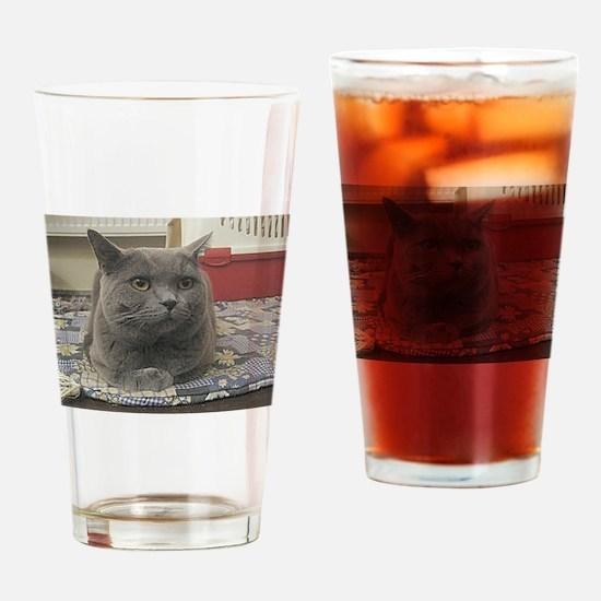 british shorthair gray Drinking Glass