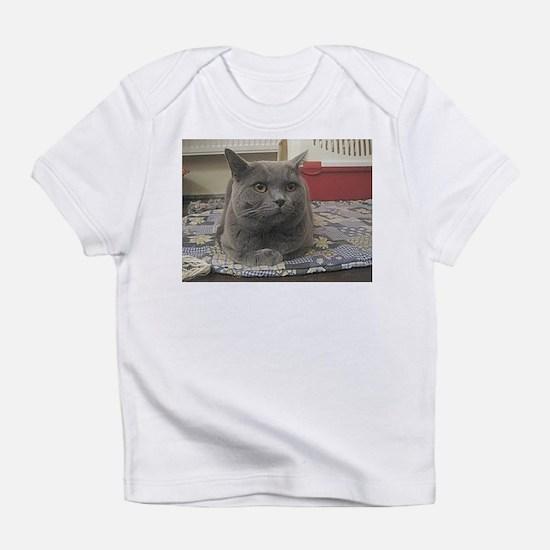 british shorthair gray Infant T-Shirt