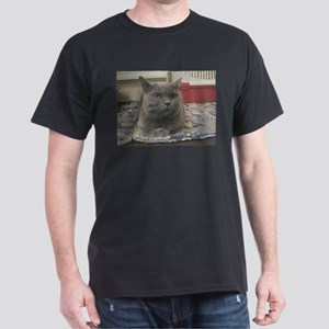 british shorthair gray T-Shirt