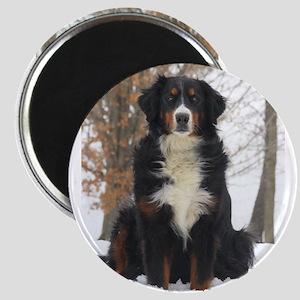 Berner in Snow Magnets