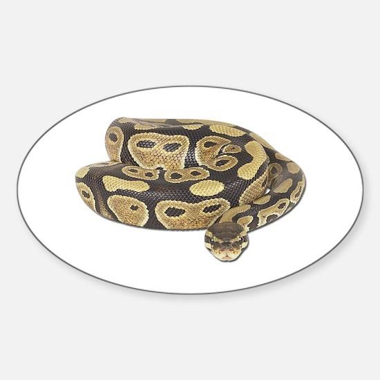 Ball Python Decal