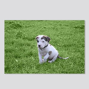 Pit Bull T-Bone Puppy Postcards (Package of 8)