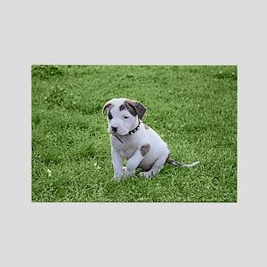 Pit Bull T-Bone Puppy Magnets