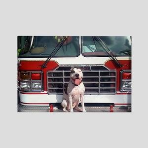 Pit Bull T-Bone Fire House Dog Magnets