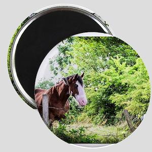 Irish Gentleman Horse Magnets