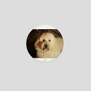 flufy white dog at night Mini Button