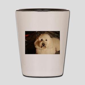 flufy white dog at night Shot Glass