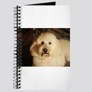 flufy white dog at night Journal