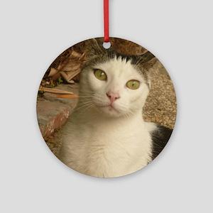 cat has green wywa Round Ornament