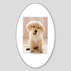 Golden Retriever Pup Sticker (Oval)