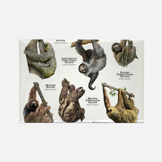 Sloths of the World Rectangle Magnet