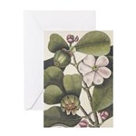 Greeting Cards (1 Card)
