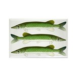 Chain Pickerel Magnets
