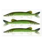 Chain Pickerel Postcards (Package of 8)
