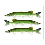 Chain Pickerel Posters