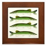 Chain Pickerel Framed Tile