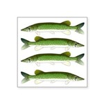 Chain Pickerel Sticker
