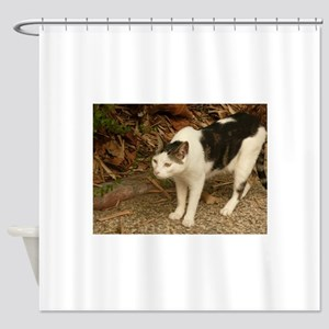 quizzical bicolor cat concentrating Shower Curtain