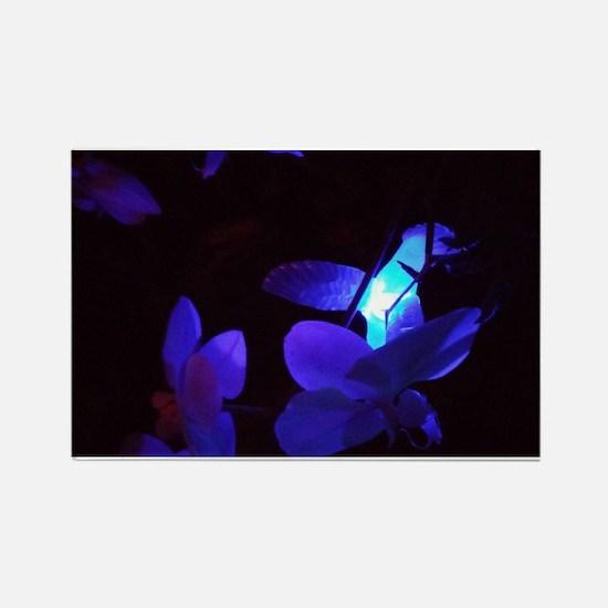 Blue Hummingbird Magnets