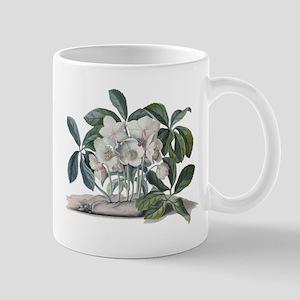 Christmas Rose (Helleborus niger) Mugs