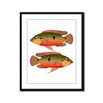 African Jewelfish Framed Panel Print