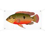 African Jewelfish Banner