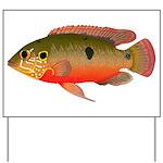 African Jewelfish Yard Sign